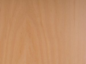 Beech Plywood Supplier