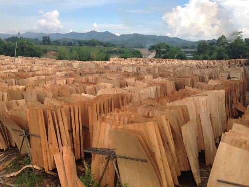 eucalyptus core veneer for plywood china